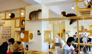 cat-cafe-to-open-in-london-east-end-cats