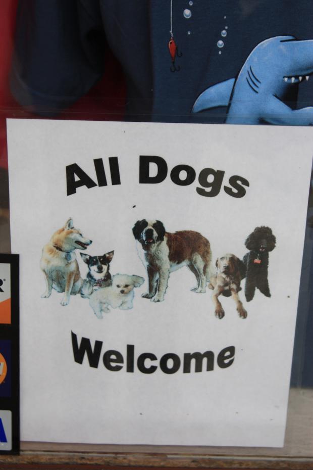 Voyager avec son chien c est possible for Hotels qui acceptent les chiens