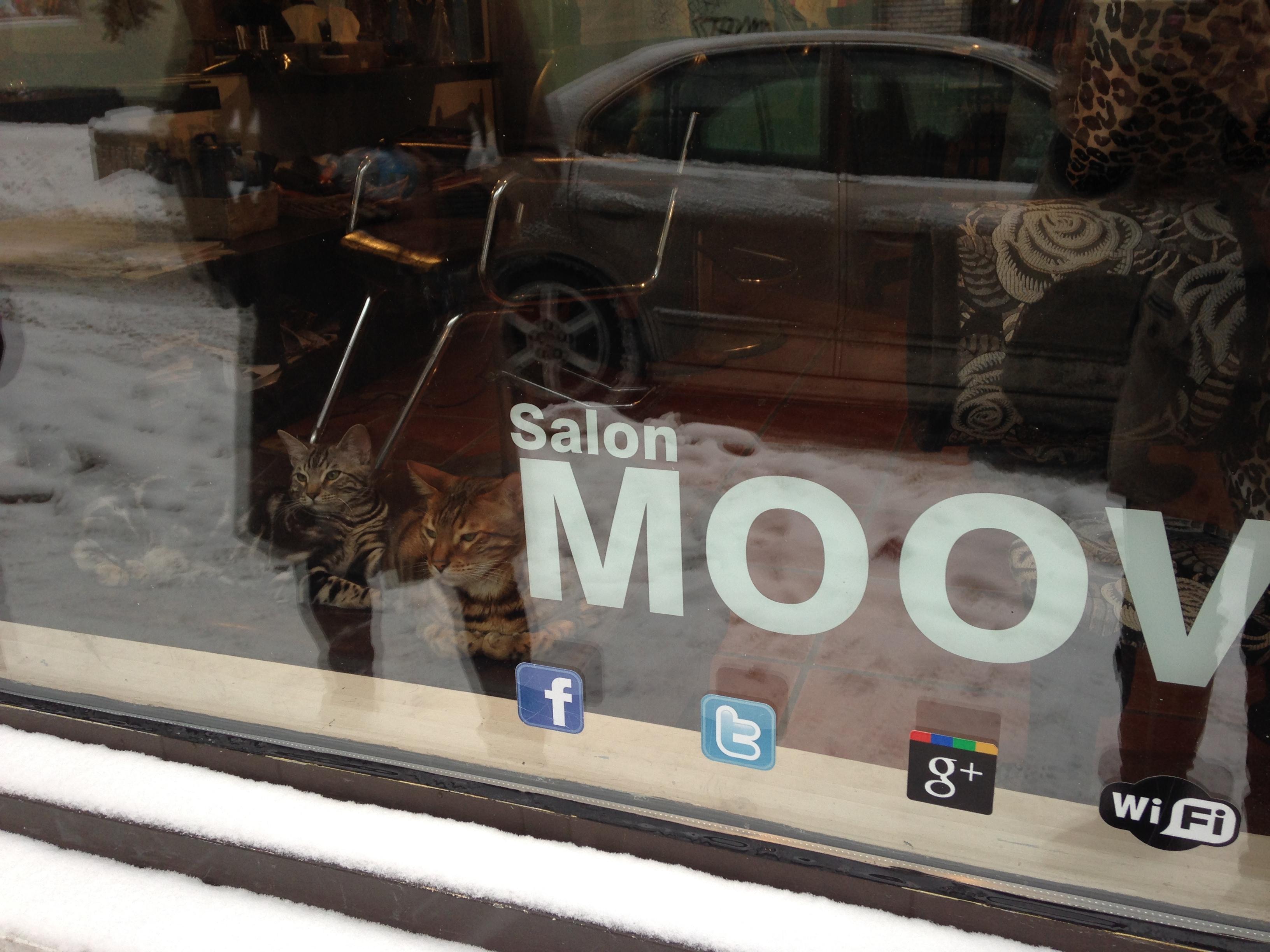 Moov un salon pas comme les autres for A le salon duluth mn